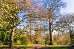 Drzewny okwitnięcie z ławkami w ogródach botanicznych przeciw niebieskiemu niebu, Obrazy Stock