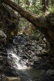 Drzewny opierać nad małym strumieniem w lesie zdjęcie royalty free