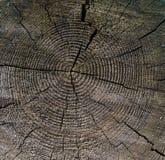 Drzewny piękny tło Obrazy Royalty Free