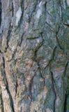 Drzewny piękny tło Fotografia Stock
