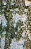 Drzewny piękny tło Obraz Royalty Free