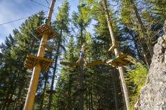 Drzewny pięcie Obraz Stock