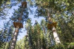 Drzewny pięcie Zdjęcie Royalty Free