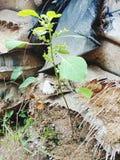 Drzewny piasek obraz stock