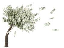 Drzewny pieniądze Obraz Royalty Free