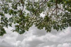 Drzewny przedpole zdjęcie stock