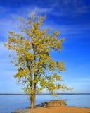 Drzewny Przegapia Jeziorny Champlain Zdjęcie Stock