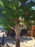 Drzewny pulower Zdjęcie Royalty Free