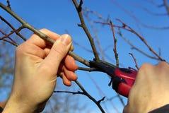 Drzewny rozcięcie 09 Fotografia Stock
