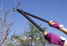 Drzewny rozcięcie w ogródzie Fotografia Stock