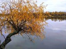 Drzewny rzeczny jezioro Fotografia Royalty Free