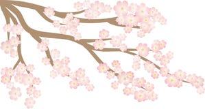 Drzewny Sakura ilustracja wektor