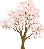 Drzewny Sakura royalty ilustracja