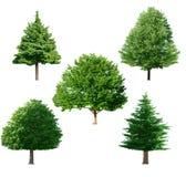 Drzewny set Obrazy Stock
