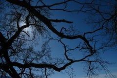 Drzewny shilouette Zdjęcie Royalty Free