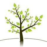 Drzewny sillhouette Obrazy Stock