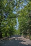 Drzewny sposób fotografia stock
