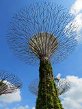 Drzewny statuaryczny, Supertree gaju ogródy zatoką, Singapur zdjęcie royalty free