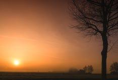 Drzewny sylwetka wschód słońca w zimie obrazy royalty free