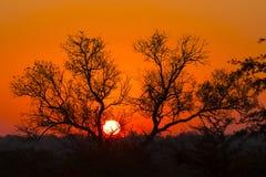 Drzewny sylwetkowy przeciw kolorowemu niebu 6 zdjęcie stock