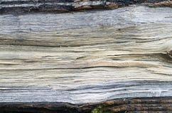 Drzewny szczegół Fotografia Royalty Free