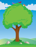 Drzewny tło Zdjęcia Royalty Free
