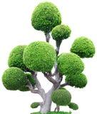 drzewny tło biel zdjęcie royalty free