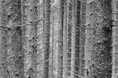 drzewny tekstura bagażnik zdjęcie stock