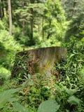 Drzewny trzonu korzenia głębii tryb obraz royalty free