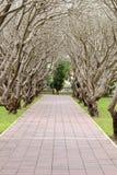Drzewny tunel Zdjęcie Royalty Free