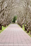 Drzewny tunel Obraz Stock