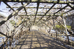 Drzewny tunel fotografia royalty free