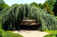 Drzewny tunel Fotografia Stock