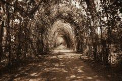 Drzewny tunel Obrazy Stock