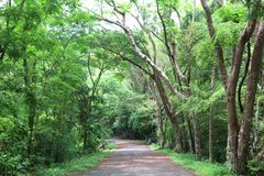 Drzewny tunel Zdjęcie Stock