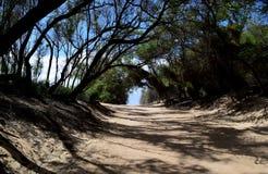 Drzewny tunel na plażowej drodze w Kauai Hawaje Fotografia Stock
