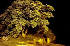 Drzewny ujawnienie Zdjęcia Royalty Free