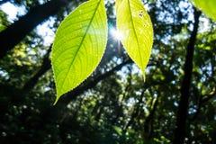 Drzewny urlop w lesie Obraz Royalty Free