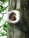 Drzewny Usta Fotografia Stock