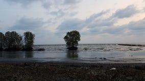 drzewny w morzu samotnie Obraz Stock