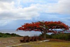 Drzewny whith kwitnie czerwień Zdjęcia Stock