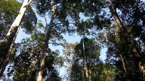 Drzewny widok w lesie Obrazy Stock