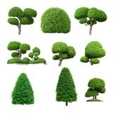 Drzewny wizerunek, Drzewny przedmiot, Drzewny JPG, Drzewna kolekcja ustawia odosobnionego Fotografia Royalty Free