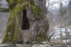 Drzewny wydrążenie Fotografia Royalty Free