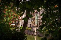 Drzewny wzrok Ljubljiana obrazy royalty free