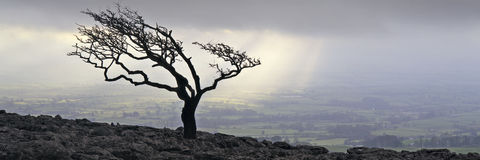 drzewny Yorkshire Obraz Stock