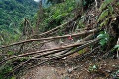 Drzewny zawalenie się po tajfunu obraz stock