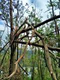 Drzewny zawalenie się po tajfunu obrazy stock