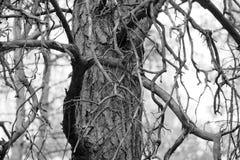 Drzewny zbliżenie Zdjęcie Royalty Free