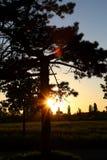 Drzewny zmierzch 001 Obraz Stock
